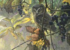 Robert Bateman - Paintings  Color scheme