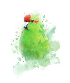 11 x 14 PRINT Red Crowned Kakariki, New Zealand Parakeet Digital Illustration Modern and fun- they look great framed and make perfect gifts. The Print: 11 x 14 x Professionally printed and packaged with foamboard. Colourful Birds, Parakeet, Parrots, Watercolor Print, Digital Illustration, Writers, Bliss, Looks Great, Art Drawings