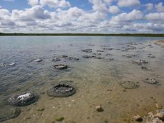 These make look like lumps of rock but they are in fact colonies of cyanobacteria which have formed Stromatolites in Lake Thetis, Cervantes WA Australia Western Australia, Perth, Colonial, Westerns, Rock, Beautiful, Stone, Locks, Batu