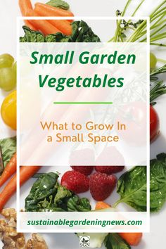 Looking for the best small garden vegetables to grow in a limited amount of space? Try these ideas for planting in 1-32 feet of garden space…