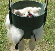 Stuck in a swing. Oh it's so cute.  21 stuck dogs. Number 14's middle dog cracks me up a lot too.