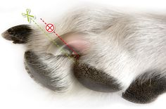 Artikel: Heeft jouw hond te lange nagels?