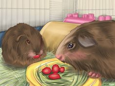 How to Tame Your Guinea Pig: 11 Steps (with Pictures) - wikiHow