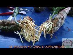 Hair Styles, Youtube, Planting Flowers, Compost, Veg Garden, Gardening, Vases, Nature, Garden