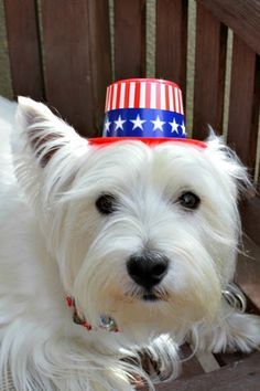 The White Dog Blog: 4th of July bloopers