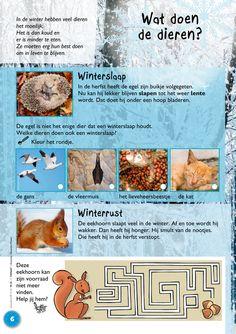 Wat doen dieren in de winter? Karen - New Ideas