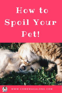How to Spoil Your Pet! - ComeWagAlong.com  #ad