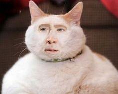 Top 33 des meilleurs détournements sur Nicolas Cage, l'acteur mème culte