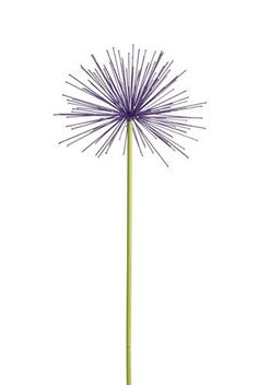 Everlasting Alliums, Set of 2, http://www.amazon.com/dp/B007XIXRZC/ref=cm_sw_r_pi_awdm_7eizvb03T4V8R