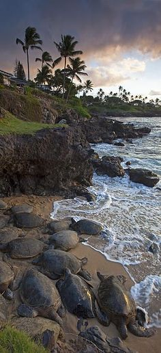 Turtle Town, Maui, Hawaii, by James Roemmling Trip To Maui, Hawaii Vacation, Maui Hawaii, Hawaii Usa, Hawaii Life, Oahu, Vacation Destinations, Dream Vacations, Vacation Spots