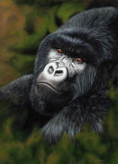mountain gorilla, free art tutorial lesson    ...BTW,Please Check this out:  http://artcaffeine.imobileappsys.com