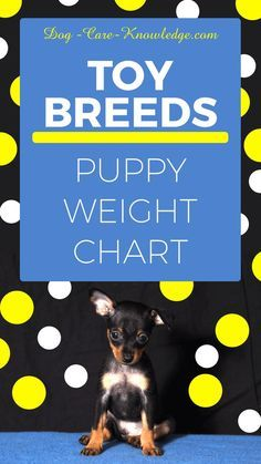 Chihuahua Puppy Weight Chart : chihuahua, puppy, weight, chart, Puppy, Weigh, Weight, Chart, Determine, Breed, Grown., #D…, Breeds,, Large, Puppies