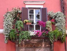 Window flowers, Rome