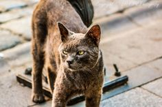 Angry Cat by Fırat Yazıcı on 500px