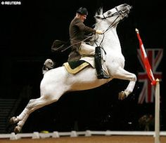 Lipizzaner Stallion performing a battle jump. This move was designed to injure enemies behind the horse and rider.