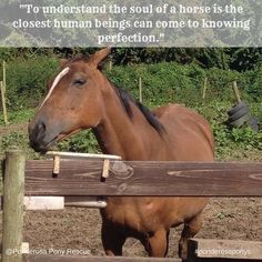 The soul of a #horse