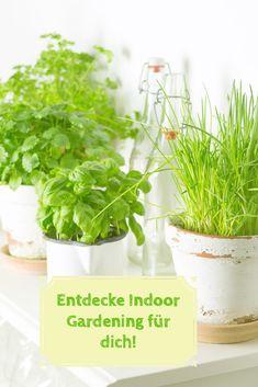 Indoor Gardening ist gar nicht schwer! Ich zeige dir, wie du Kräuter, Salate, Sprossen und Basilikum in deiner Wohnung sprießen lässt. Endecke Indoor Gardening für dich! Kraut, Herbs, Gardening, Flowers, Plants, Food, Cluster, Indoor, Fruit And Veg