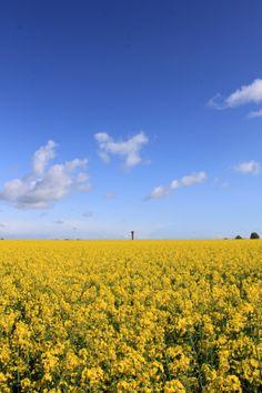 dancing in fields of gold.