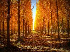 No es lo mismo el otoño en Mendoza ♪
