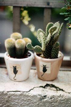 Cacti in black cat planters