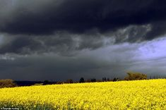 Dark skies & Treasure in our fields!