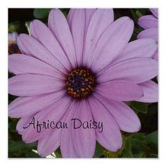lovely lavender Flower