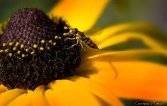 How to Take the Perfect Spring Flower Macro Photograph