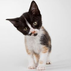 Cats make lots of noises -- meowing, purring, chirping -- but what does it all mean? Find out./