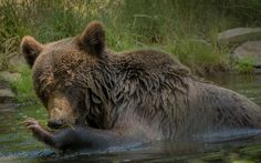 Wildlife in Romania: 4 experiences that your inner adventurer will love - True Romania Danube Delta, Bird Species, Brown Bear, Romania, Habitats, Wilderness, Travel Destinations, Wildlife, Tours