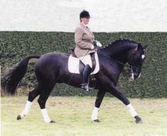 KnightleyPark - Stallion Data