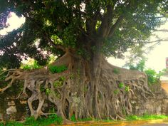 so pretty tree