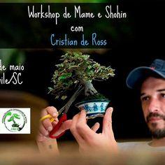 Workshop com Cristian de Ross. 06 de Maio 2017. https://www.niponbonsai.com.br/Workshop-de-Mame-e-Shorin-com-Cristian-de-Ross  Contato. (47) 99735-8356