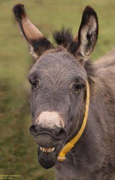 "A nice donkey rescued by ""Il Rifugio degli Asinelli"" smiling at me ;)   Courtesy: Rachel Totaro, (Italy)"