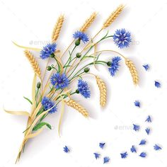 Cornflowers and Wheat Ears Bunch (Vector EPS, CS5, background, blue, bouquet, bud, bunch, cereals, cornflowers, country, decoration, ear, field, floral, flowers, grain, herb, leaf, mature, nature, petal, plant, realistic, reaping, scattered, season, summer, vector, weed, wheat, wheaten, wildflowers)
