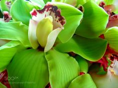 Orchid by WendiBrewer