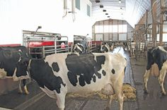 """Tullando Farm, of Orford, New Hampshire, was featured in the story, """"Why I Chose Robots: Tullando Farm"""" in the April 1, 2016 issue of Progressive Dairyman. Check out the story to see how this Red Wing Software customer is using technology to keep moving forward!http://www.progressivedairy.com/topics/people/why-i-chose-robots-tullando-farm"""