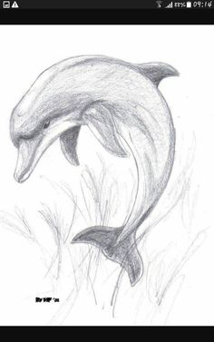 Animal Drawings Images For > Pencil Drawings Of Dolphins Art Drawings Sketches Simple, Pencil Art Drawings, Realistic Drawings, Easy Drawings, Animal Drawings, Drawing Ideas, Animal Sketches Easy, Pencil Drawing Inspiration, Pencil Drawing Tutorials