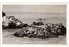 Vintage 1930's Real Photo Postcard Seal Rocks San Francisco California Piggott Photo Number 523