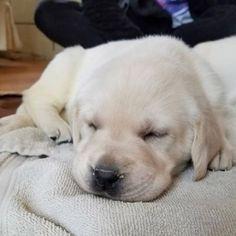 Puppy Sleep Puppy Sleep
