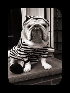 """M.      """""""" bark at grumpy cat and got jail!  And public service at schools  teaching puppy's that cats are great pets!""""        Baggy Bulldogs"""