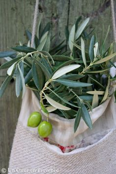 A Heart in Provence: Olive Branches
