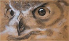 wildlife, owl drawing, charcoal and chalk