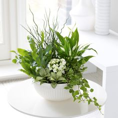 This tropical planter can be put together in about 20 minutes and makes a cute spring or summer centerpiece. Customize it with your favorite plants! Flower Planters, Flower Pots, Container Plants, Container Gardening, Modern Flower Arrangements, Flower Cart, Order Flowers Online, Cactus Y Suculentas, Indoor Plants