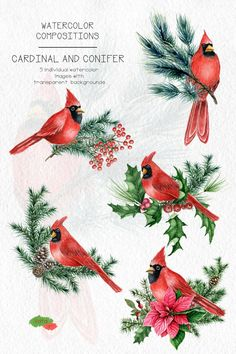 Watercolor Christmas Cardinal bird Clipart, Conifer branches, Hand drawn Cardinal berry poinsettia PNG, Winter clip art, Commercial use Christmas Decoupage, Christmas Bird, Christmas Flowers, Christmas Images, Christmas Crafts, Watercolor Cards, Watercolor Flowers, Bird Clipart, Watercolor Christmas