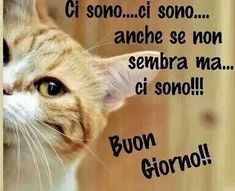 Good Morning Coffee, Good Morning Good Night, Day For Night, Good Day, Italian Memes, Italian Quotes, Animals And Pets, Funny Animals, Cute Animals