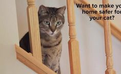 Tips For Cat-Proofing Your Home   Care2 Healthy Living