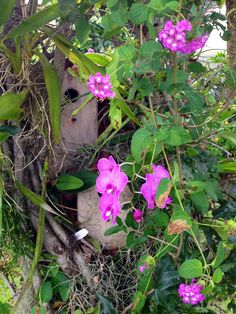 Orchid and bird house