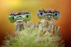 Two nice faces! by aghizzipanizza