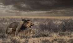 dusk and dawn – Bruna Photography Dusk Till Dawn, Out Of Africa, Lions, Wilderness, Wildlife, Elephant, African, In This Moment, Romance