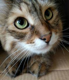 Cat in box                                                                                                                                                                                 More
